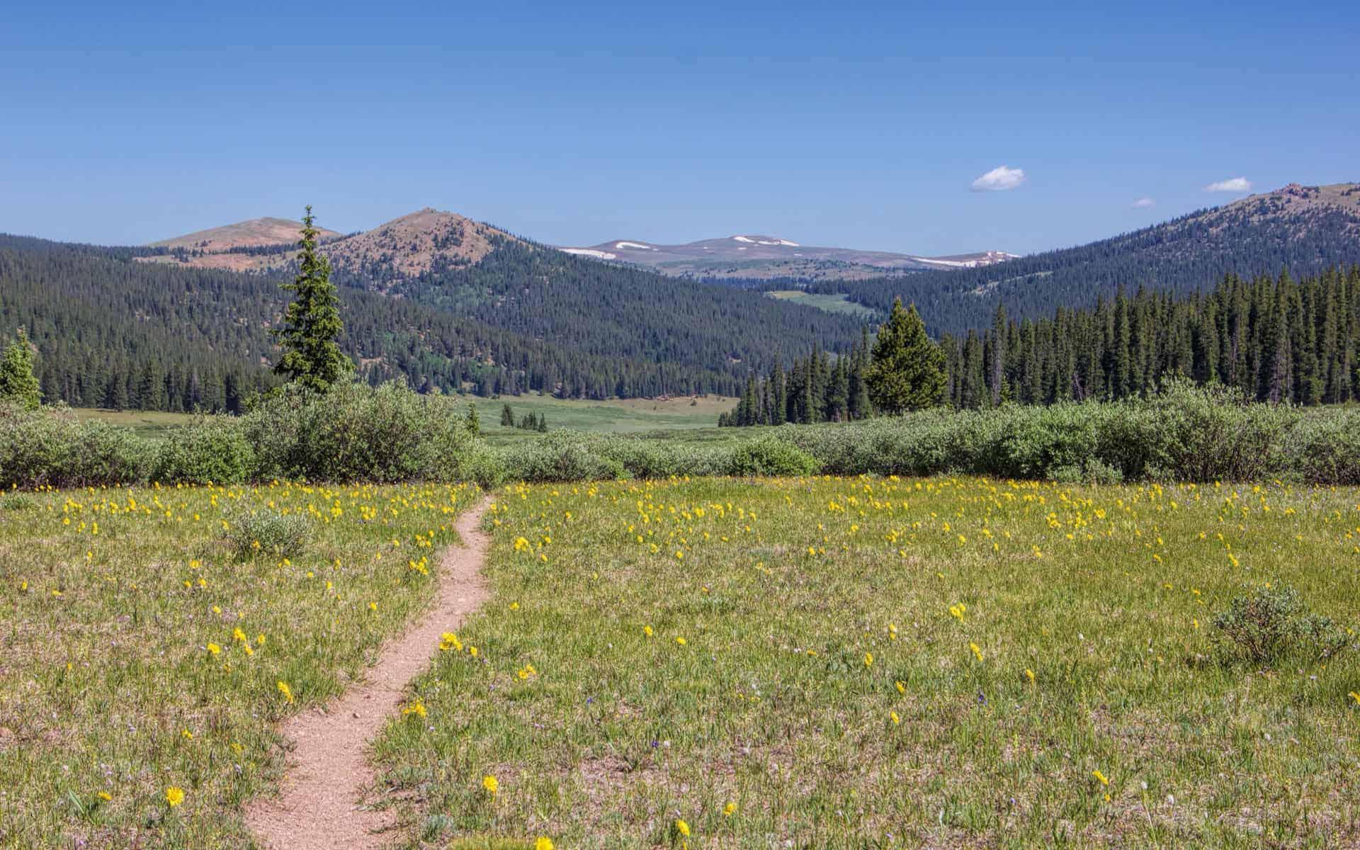 Buffalo Peaks Wilderness summer flowers